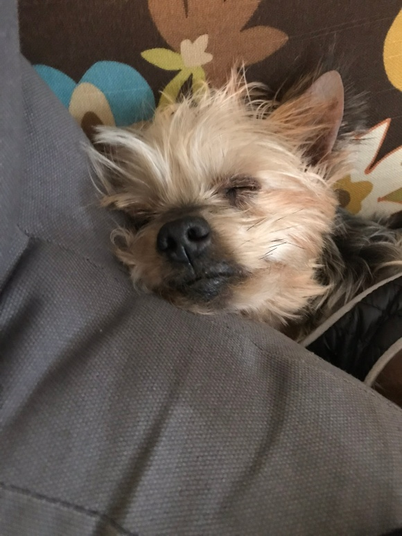 Noodle nap